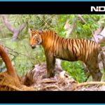 K.Gudi Wilderness Camp - Jungle Lodges, and Resorts B R Tiger Reserve India Ghoomo_4.jpg