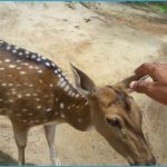 K.Gudi Wilderness Camp - Jungle Lodges, and Resorts B R Tiger Reserve India Ghoomo_9.jpg