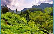 Kolukkumalai Tea Estate - Tamil Nadu Munnar India Travel_0.jpg