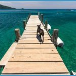 Travel Advice And Advisories For Roatan_8.jpg