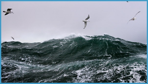 High Seas Surfing_15.jpg