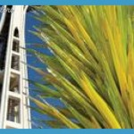 Space Needle and Chihuly Garden and Glass Combination Ticket Seattle_9.jpg