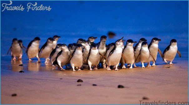 Melbourne  Phillip Island Little Penguins Parade_1.jpg