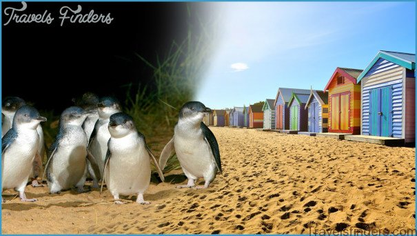 Melbourne  Phillip Island Little Penguins Parade_12.jpg