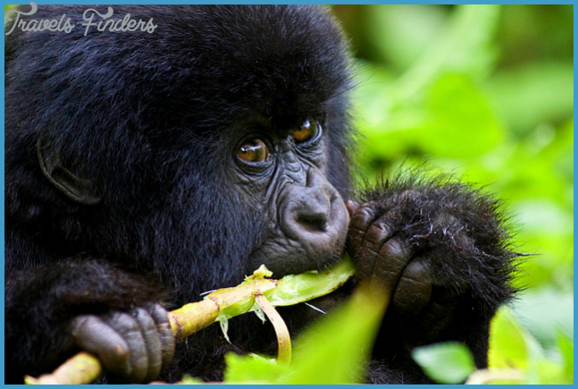 Travel To Rwanda | Chill Feel