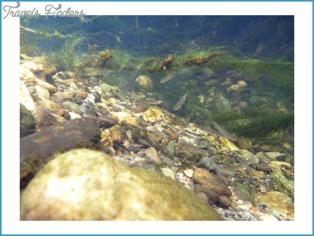 Arroyo Sequit Creek Steelhead Barrier Removal Project