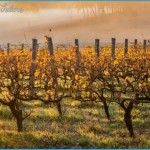 Margaret River Wine Route: Top Stops