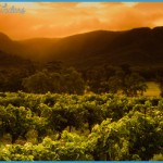 Travel: Hunter Valley wineries to visit