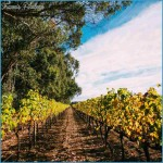 World Class Australian Wineries