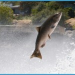 North state fishing report for week of