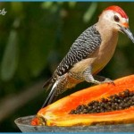 Birding in Belize | Belize is a paradise for birdwatching