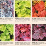 painted by nature with their vibrant and varied leaves heucheras extend colour in borders throughout autumn and beyond 1