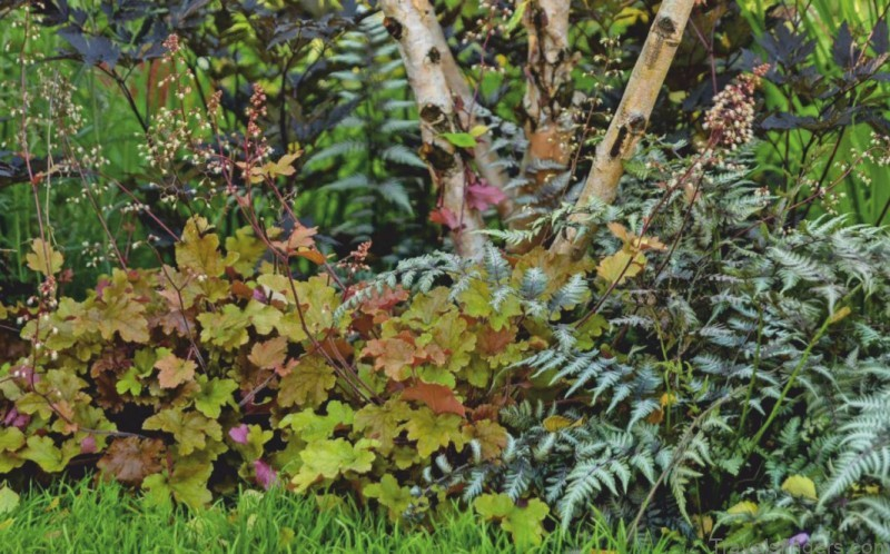 painted by nature with their vibrant and varied leaves heucheras extend colour in borders throughout autumn and beyond 2
