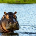 lower zambezi national park 4